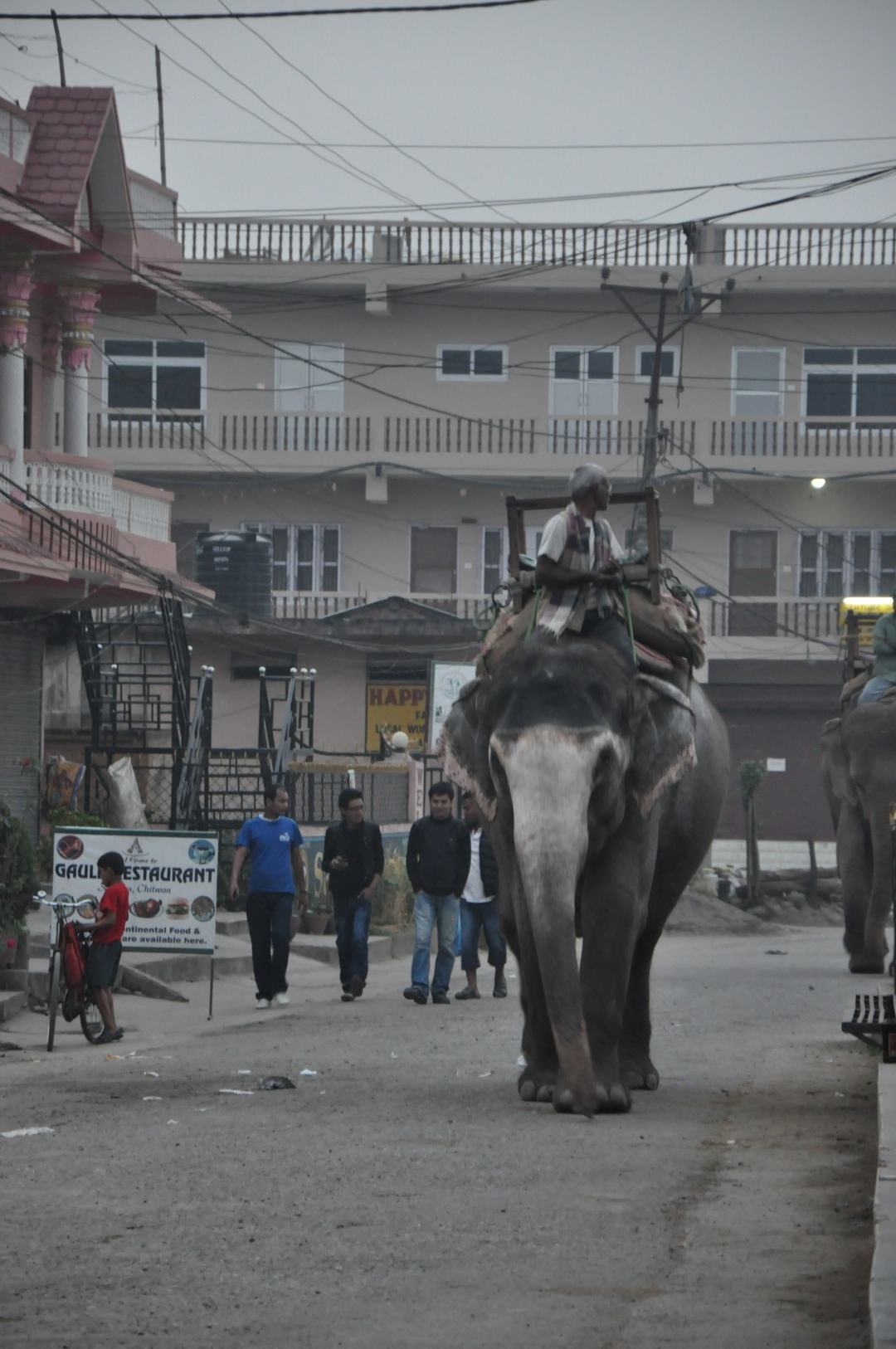 An old elephant in the early morning