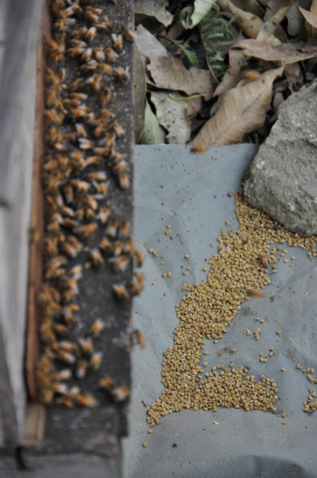 Spent pollen sacs