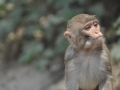 Sunning monkey